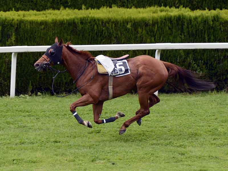 กีฬาขี่ม้า