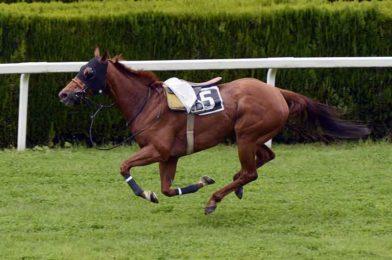 ราคาตก เควินโอมัลเลย์กล่าว ที่แฟรี่เฮาส์มีการขายม้าดีราคาเบาๆ