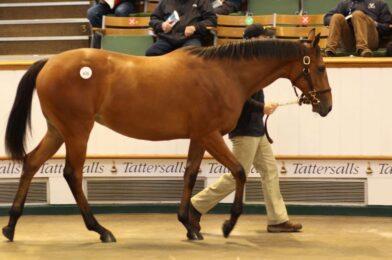 ยอดขายสูงสุด กาลิเลโอ ฟิลลี่ คือม้าที่มีการขายออกเยอะที่สุดในโลกตอนนี้