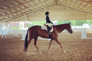 เรียนรู้ที่จะเดินอีกครั้ง หลังจากไรเดอร์ต้องเจอการลดลงอย่างมากกับรถพยาบาลำหรับนักขี่ม้า