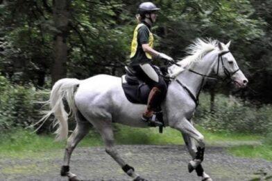 ความสุขที่เสพติด การแข่งม้าแบบมาราธอน
