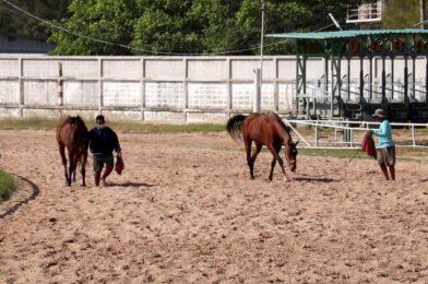 โรคระบาดหนัก เจ้าของม้ากระอักข้างหลังพบพิษ