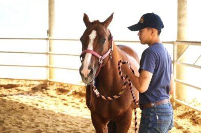 แวดวงม้าไทย สัตวแพทย์รับกาฬโรคแอฟริกาในม้าระบาดในไทยวิกฤตที่สุด