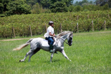 ขี่ม้าต้องใช้ใจ เป็นกีฬาขี่ม้าชัยชนะที่ใช้ใจผสานใจ