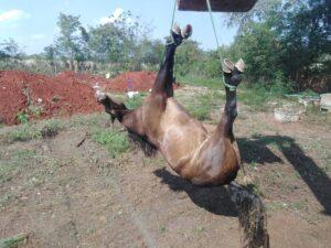 แวดวงม้าไทย