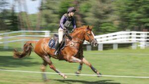 ม้าของฝรั่งเศส