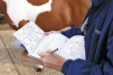 ตรวจสอบล่วงหน้า นักสัตวแพทย์ม้าในระหว่างการออกโรง