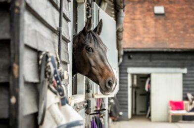 ตั้งเป้าระดมทุน คำวิงวอนเร่งด่วนเพื่อช่วยโรงเรียนสอนขี่ม้าในลอนดอนสำหรับชุมชนที่ให้บริการ